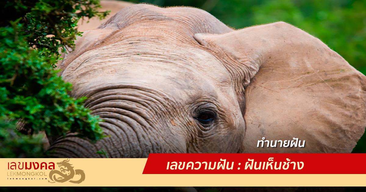 เลขความฝัน : ฝันเห็นช้าง