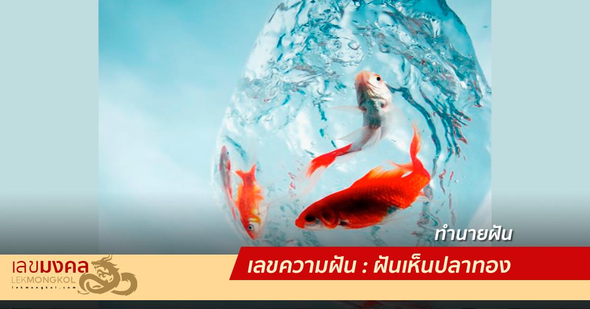 เลขความฝัน : ฝันเห็นปลาทอง