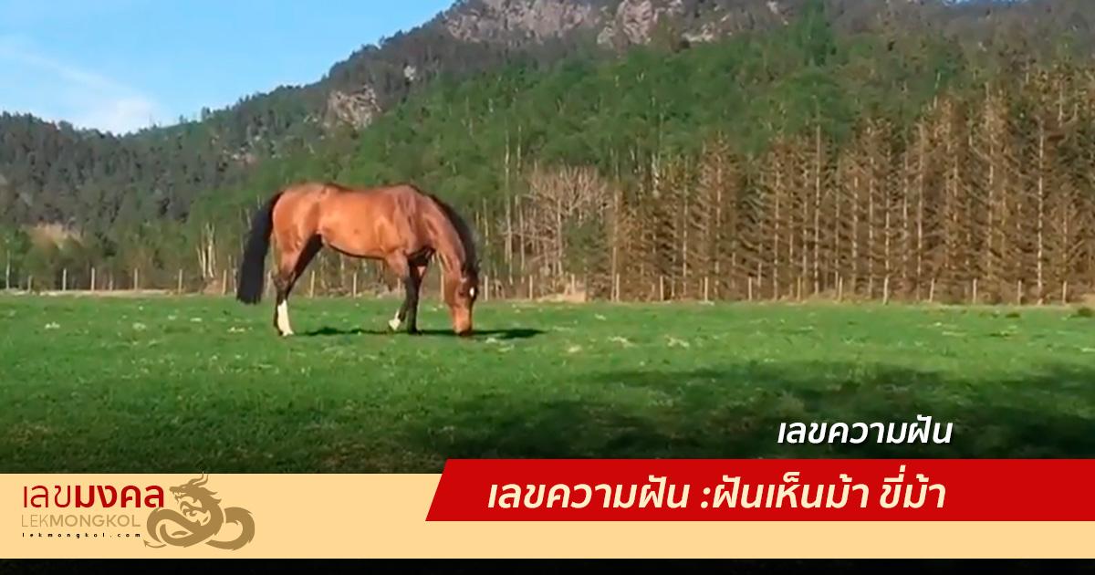 เลขความฝัน : ฝันเห็นม้า