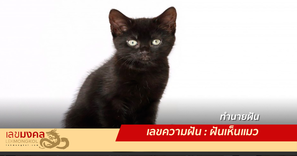 เลขความฝัน : ฝันเห็นแมว