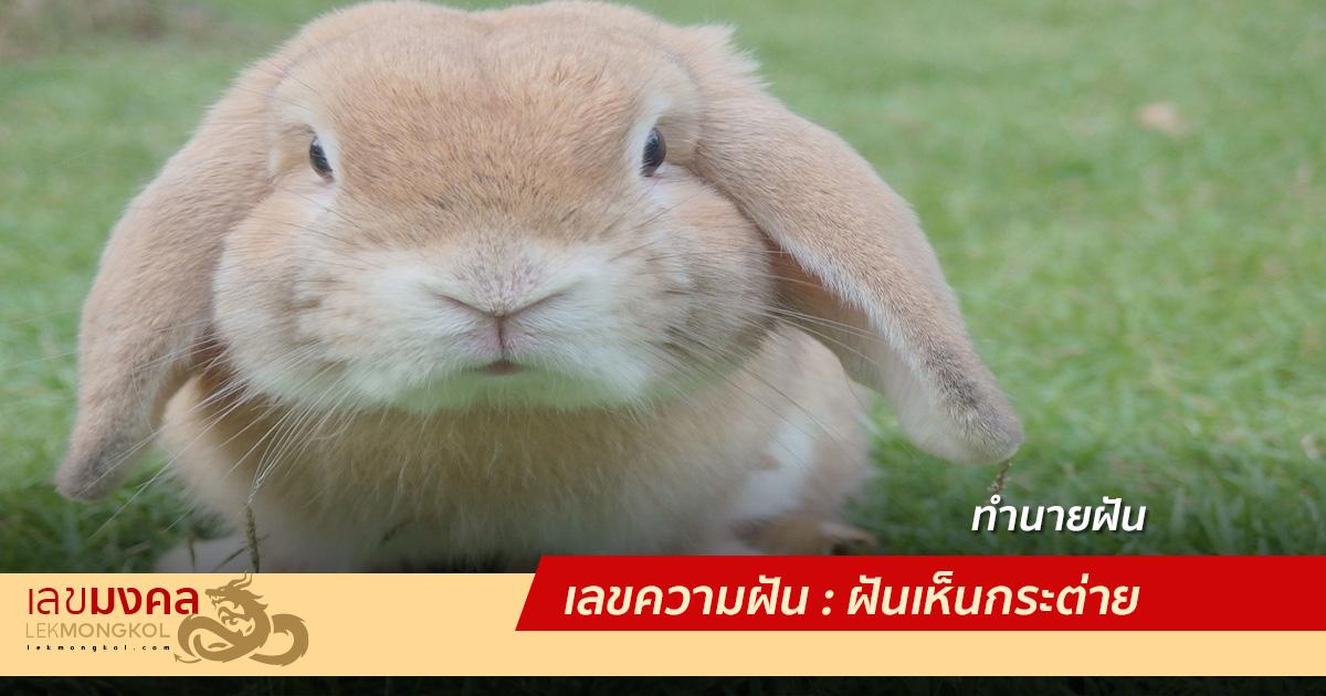 เลขความฝัน : ฝันเห็นกระต่าย