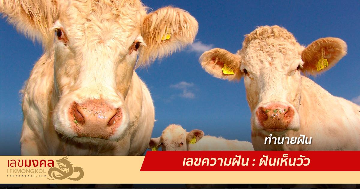 เลขความฝัน : ฝันเห็นวัว