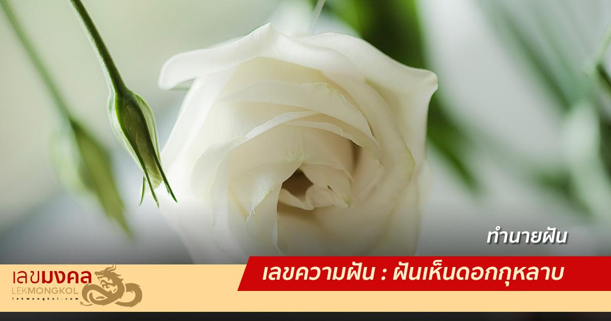 เลขความฝัน : ฝันเห็นดอกกุหลาบ
