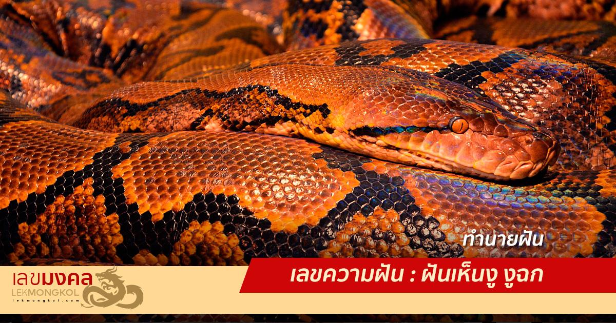 เลขความฝัน : ฝันเห็นงู งูฉก