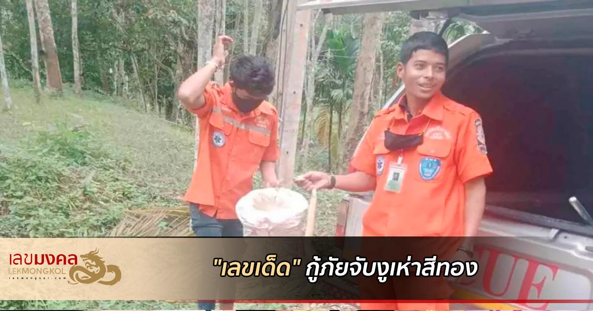 ส่องเลขเด็ด กู้ภัยจับงูเห่าสีทองเข้าบ้าน
