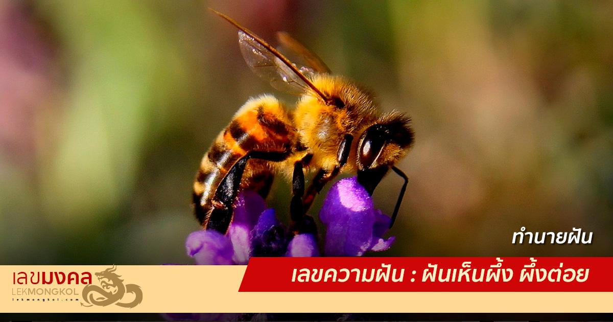 เลขความฝัน : ฝันเห็นผึ้ง ผึ้งต่อย
