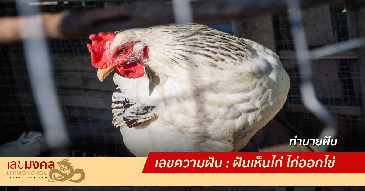 เลขความฝัน : ฝันเห็นไก่ ไก่ออกไข่ ลูกไก่ ลูกเจี๊ยบ