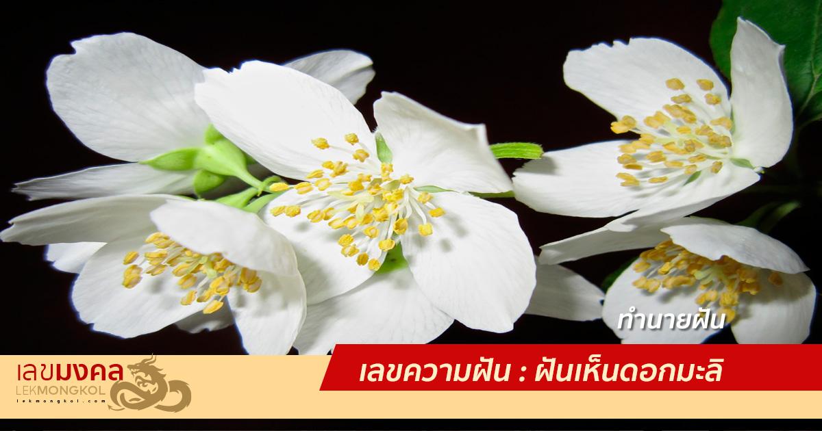 เลขความฝัน : ฝันเห็นดอกมะลิ